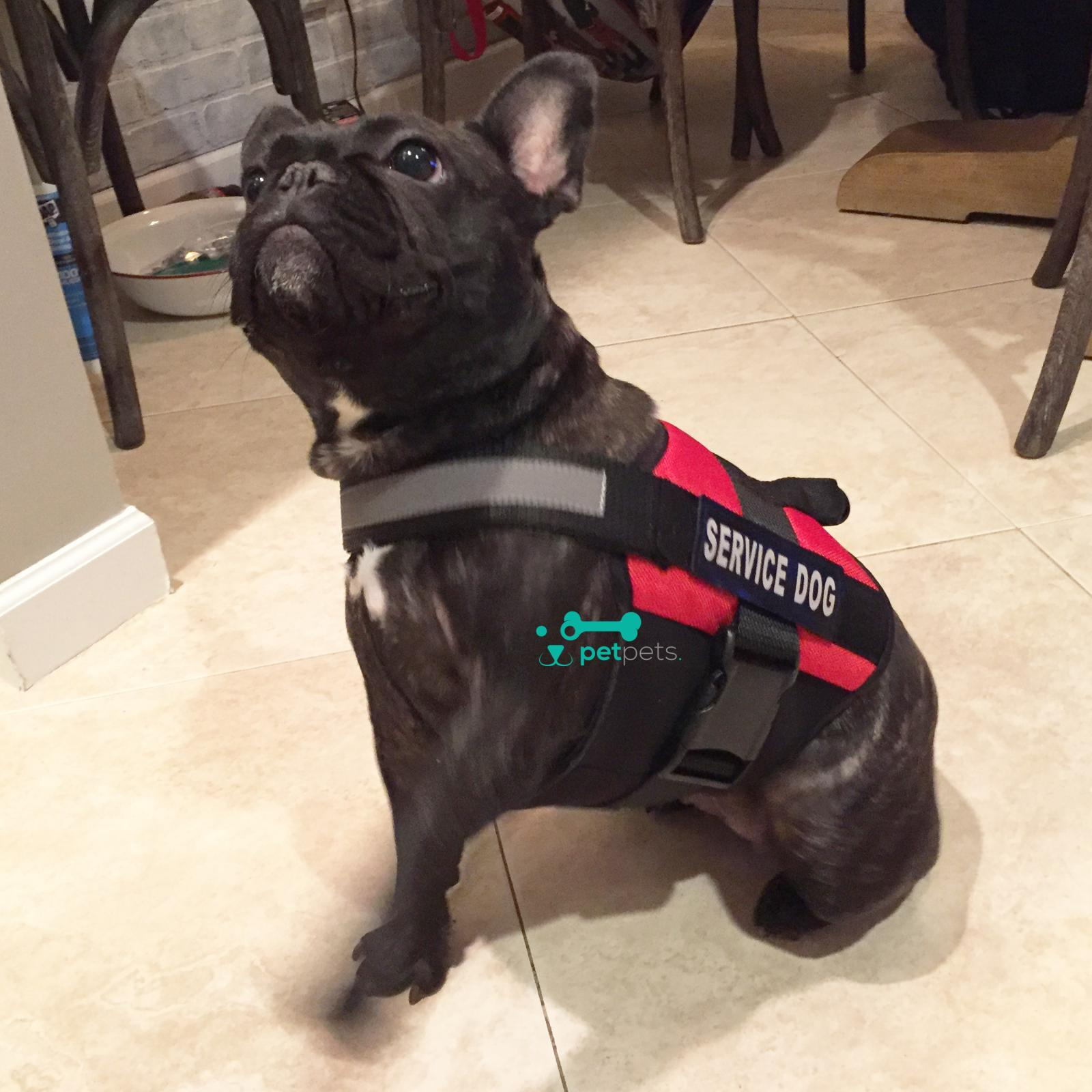 Service Dog Harnesses Gear Anxiety Vest For Dogs